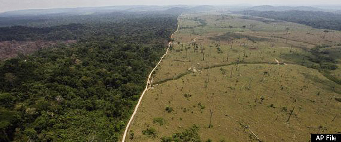 Deforestation In Brazil. Amazon Deforestation In Brazil
